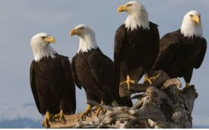Eagles only fly with Eagles