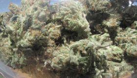 Jar full of marijuana buds